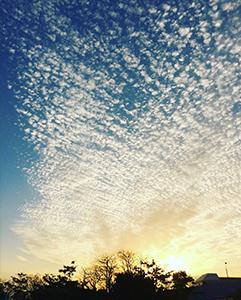 空を見上げると、得した気分。