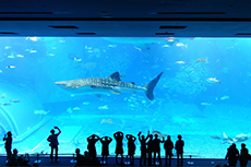 美ら海水族館写真
